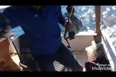 Tekneden çipura avı güncesi