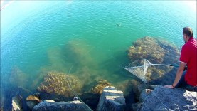 Alanya lrf ile akya (lichia amia) avı ASOB