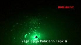 Yeşil Led Kalamar Lambası Balıkların Toplanması