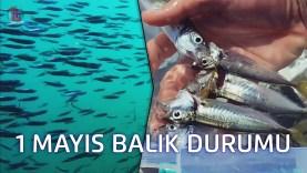 1 MAYIS 2019 Balık Durumu | İstanbul Boğazı | Çaça ve Kıraça Sürüsü