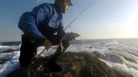 Atçek ile levrek avı videosu
