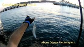 Çanakkale At Çek Uskumru Kolyoz Trokonya Balık Avı – Akşam Suyu Shorejig