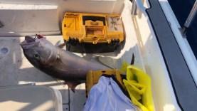 El takımıyla 10 kg'lık kuzu balığı avı