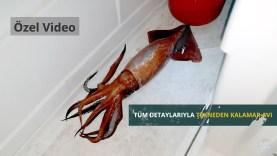 Tüm detaylarıyla gece derin suda kalamar avı (European flying squid hunting)
