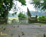 alas kedaton, monkeys, forest, monkey forest, bali, places, places of interest, bali places of interest, sanctuary