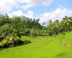 rice paddy, gunung kawi, bali, gianyar, temples, archaeological sites, places to visit