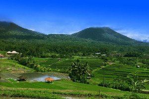 subak, irrigation system, organization, jatiluwih, bali, unesco, world, heritages, sites, rice, paddy, terrace, rice terrace, jatiluwih rice terrace, unesco world heritages
