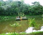 fish, pond, watukaru, batukaru, temple, watukaru temple, batukaru temple, pura, pura batukaru, bali, places, places of interest, bali places of interest
