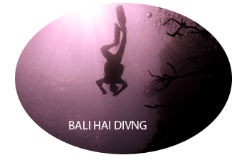 diving-di-menjangan