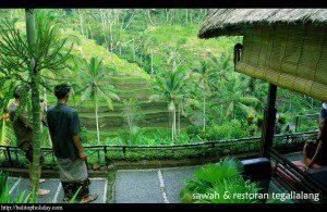 restoran-view-sawah