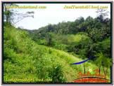 Beautiful 15,490 m2 LAND SALE IN UBUD BALI TJUB568