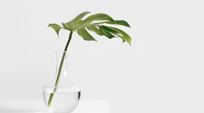 Bewässerung von Balkonpflanzen