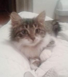 Scampi : Femelle de 4 mois encore un peu craintive. Besoin de patience.