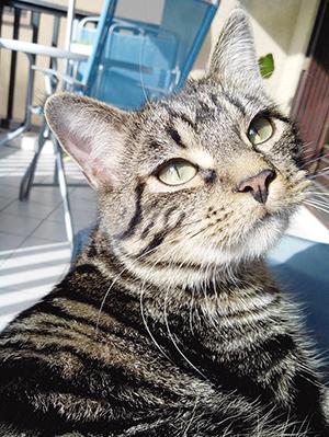 CLOVIS : Très câlin et très doux - A une patte arrière accidentée - besoin accès extérieur - Ok chats, enfants - A peur des chiens.