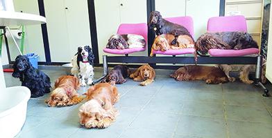 Plusieurs chiens maltraités, stérilisés au fur et à mesure.
