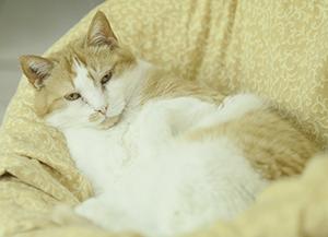 CHATS : De nombreux chatons et chats adultes attendent au refuge ! Venez les rencontrer !
