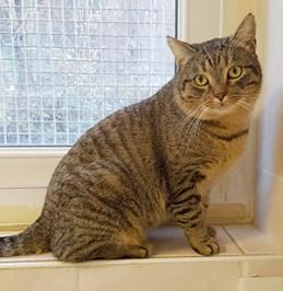 COMBARUCHE : Quelques chats à l'adoption : des mâles et des femelles entre 1 et 4 ans.