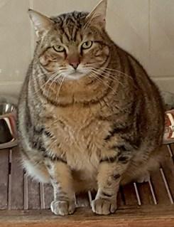 MISTER CAT : Quelques chats à l'adoption : des mâles et des femelles entre 1 et 4 ans.
