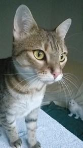 NALA : 2 ans, joueuse, OK chats, très caline.