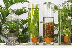 Plantes d int rieur sous verre ballad et vous for Plante interieur en ligne