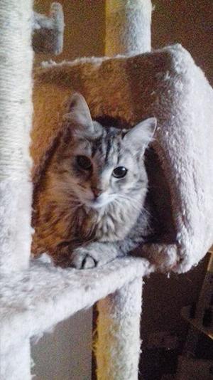 MOLLY : Minette d'1 an, poils mi-longs et très doux, très calme et gentille, une vrai crème.