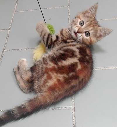 Molie : Cette jolie minette ainsi que de nombreux autres chatons attendent une famille d'adoption.