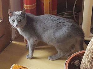 GRIZZLY : Matou de 9 mois, adore les câlins et la compagnie des humains et des chats.