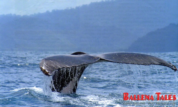 Costa-Ballena-Whales-Tail