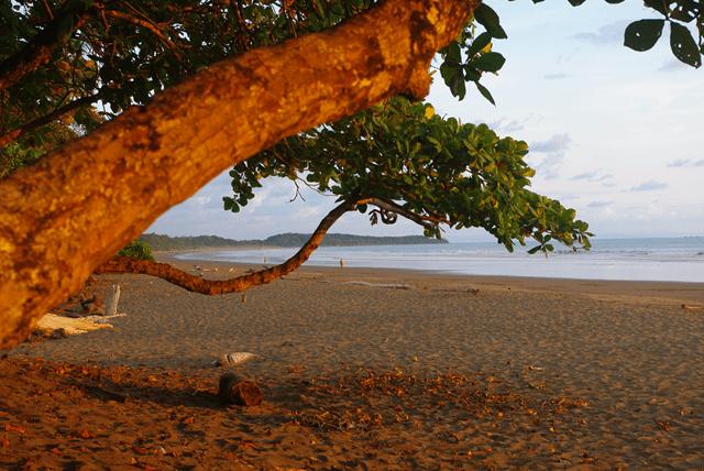sp-playa-colonia