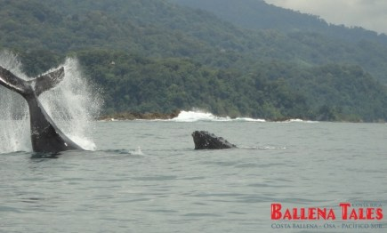 whale-watching-tour-costa-ballena-costa-rica-1