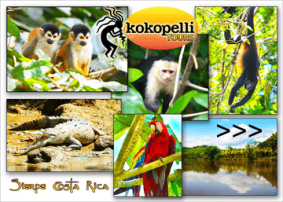 kokopelli-mangrove-tours-sierpe-puravida-costarica, costaballenalovers, arrows,