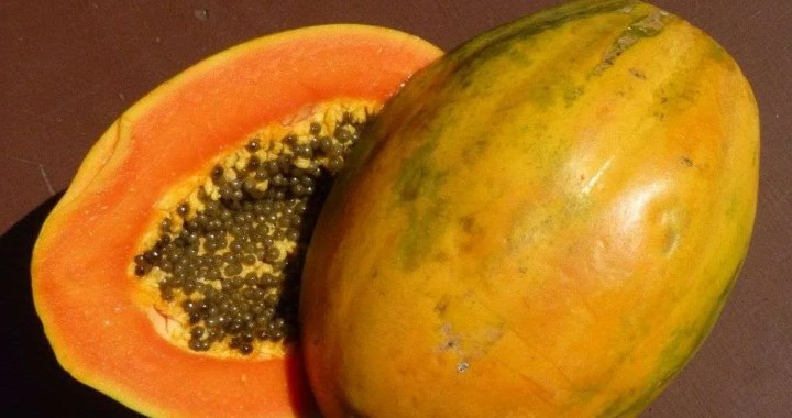 Fresh from the Feria: Papaya, semillas, seeds