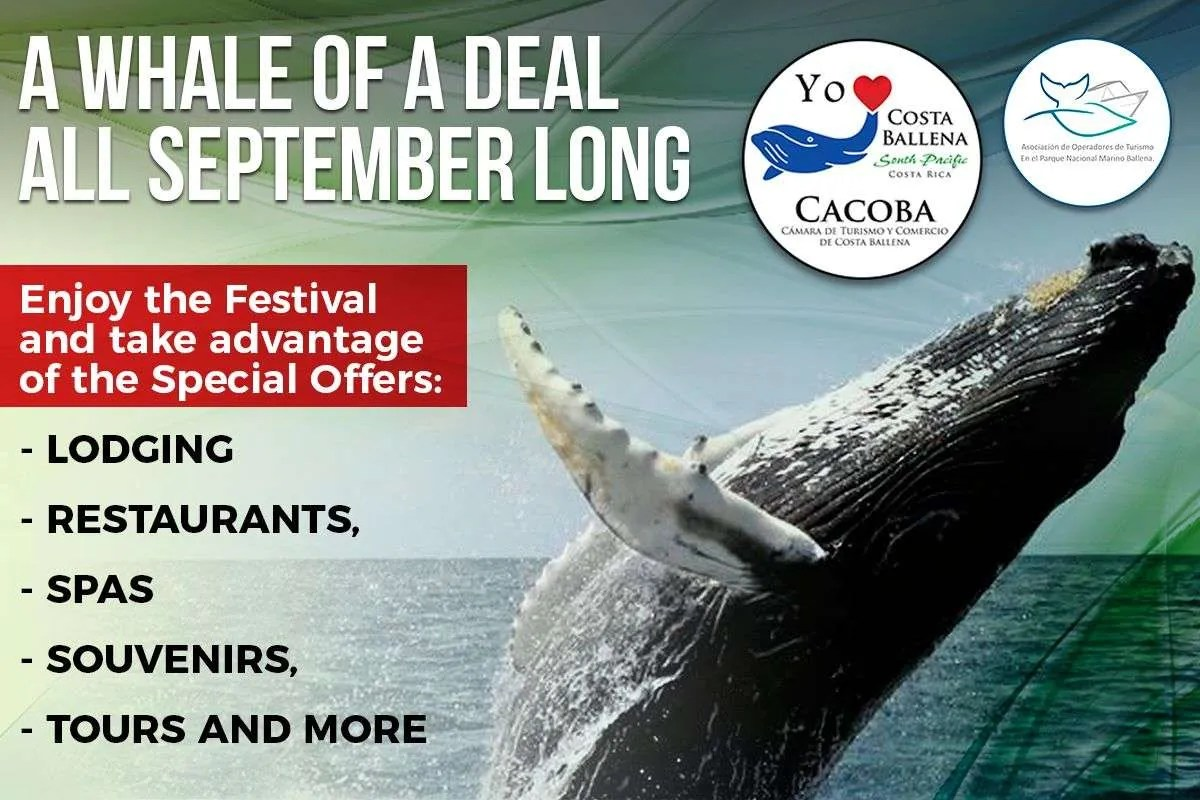 A whale of a deal, big offers all September long in Costa Ballena, WHALE OF A DEAL, whales and dolphins festival