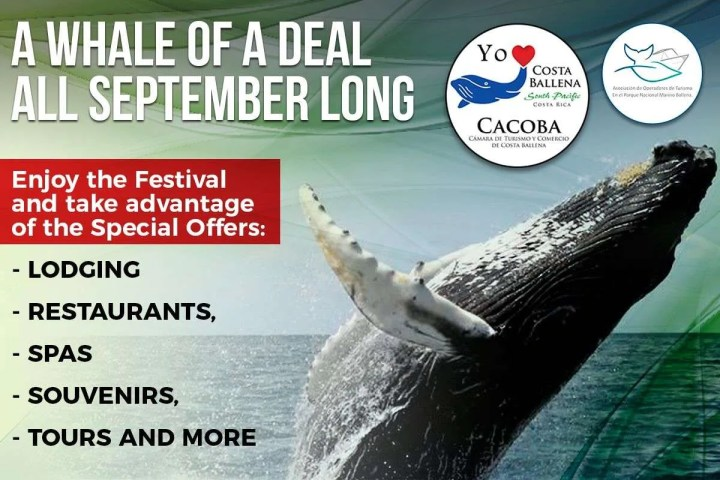 Whales and dolphins festival, A whale of a deal, big offers all September long in Costa Ballena