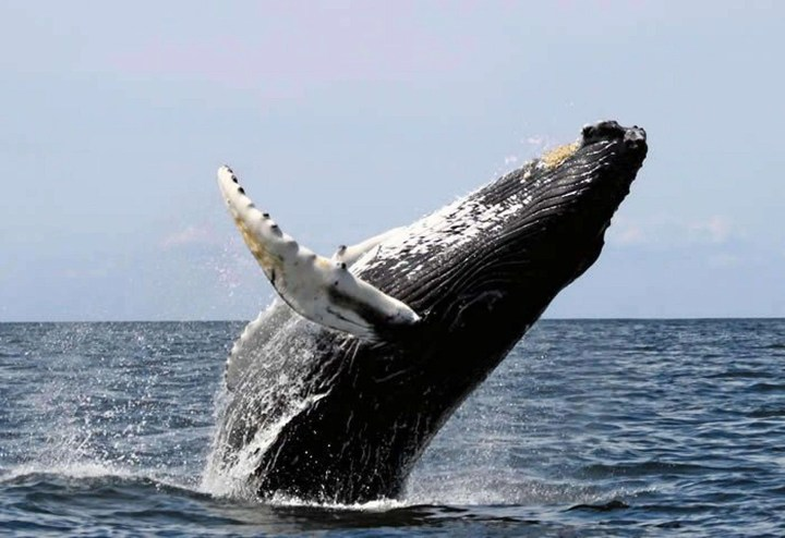 Stay one more night ~ a Whale of a Deal - Osa, Uvita - Ballena Tales