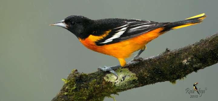 Welcome Migratory Birds