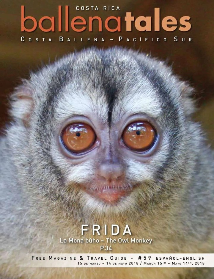 Frida the owl monkey, Costa Rica Vacacations