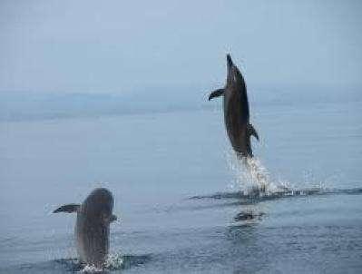 Wal- und Delfinbeobachtungstouren in Costa Rica 1