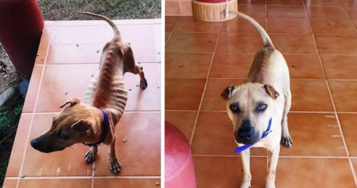 DAWG: Great Progress !Éxito! Gran progreso