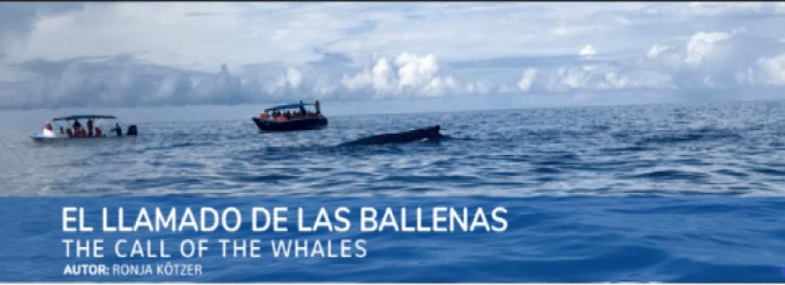 la llamada de las ballenas