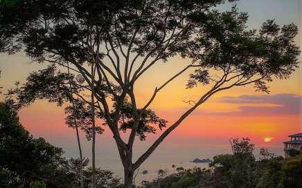 Urban Life vs. Life in the Tropics, Vida Urbana vs. Vida en los Trópicos