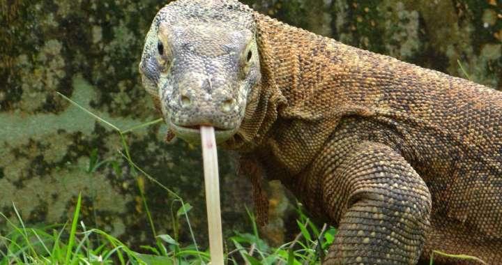 reptilandia reptiles park
