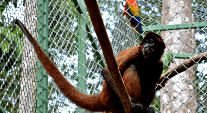 Wildlife Sanctuary in Osa 1