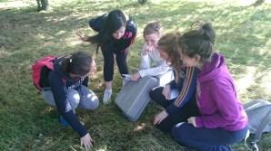 Ecology Field Study