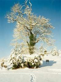 sean-na-sagart-tree