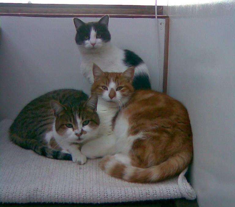 Kozy Kats Cattery