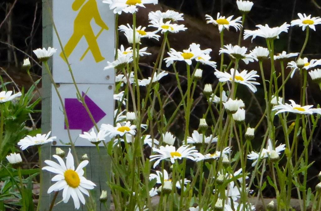 Wildflowers of the Mizen