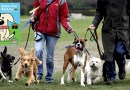 Green Dog Walkers Campaign