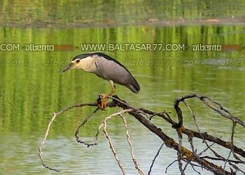 fotos fauna y flora