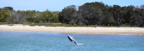 Dolphin eco-cruise, Bunbury